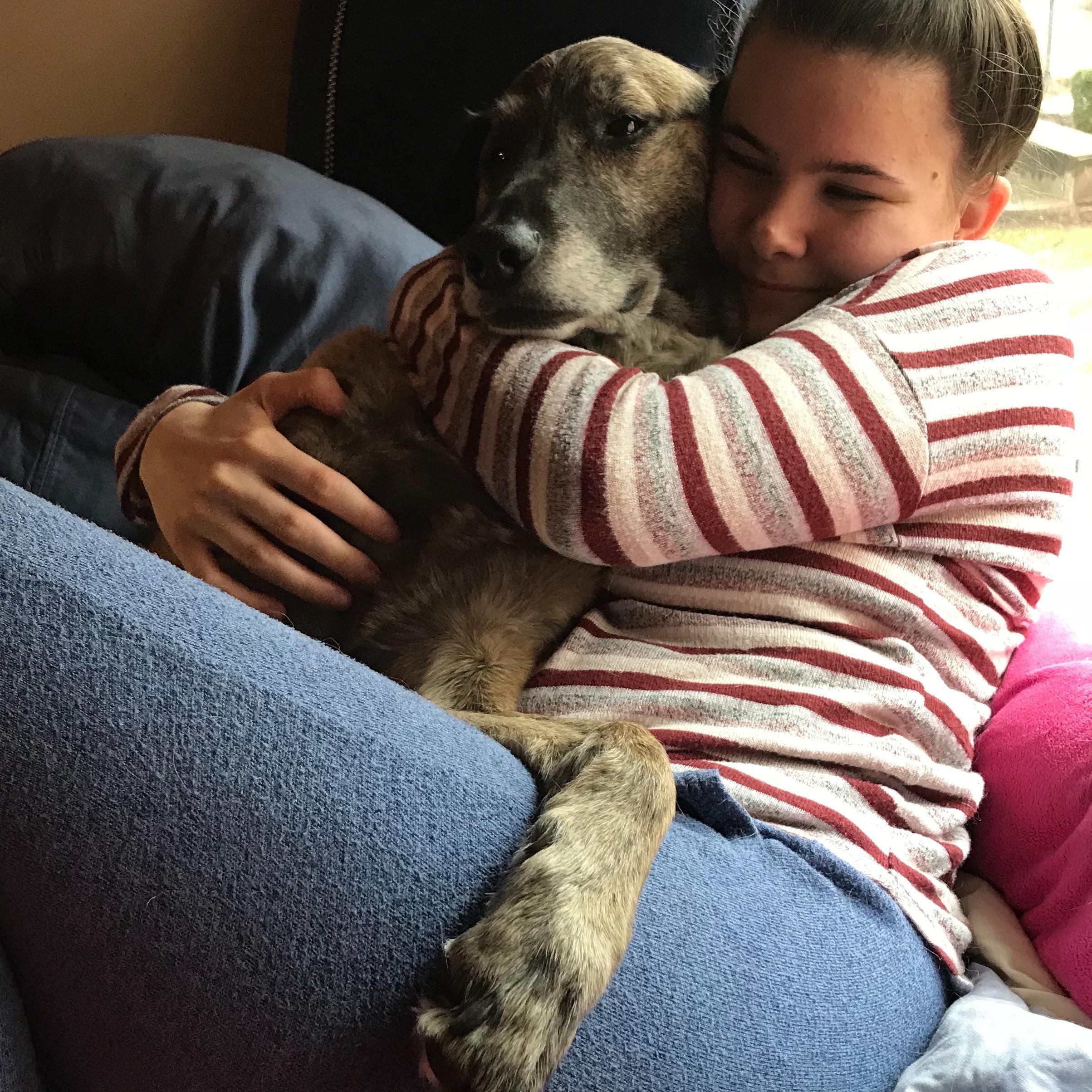 Shealyn's dog day care