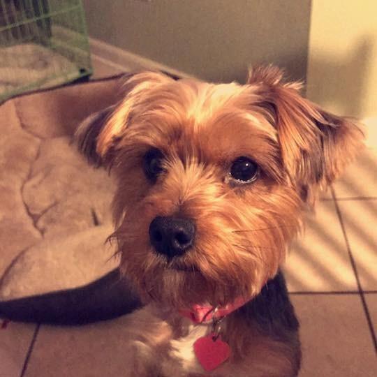 dog walker Sandy