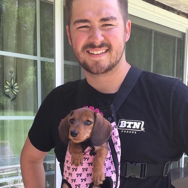 dog walker Harrison