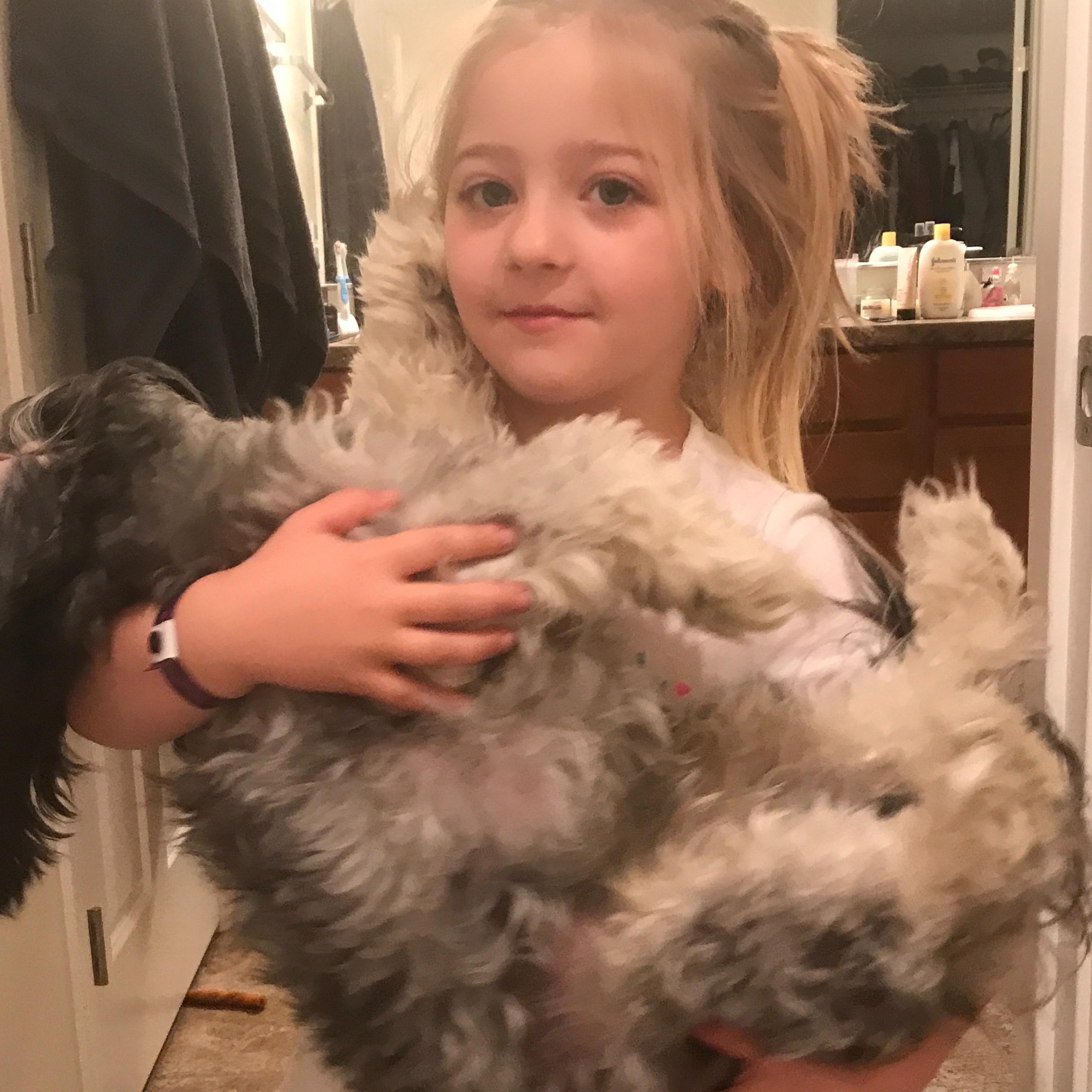 Brittane's dog day care