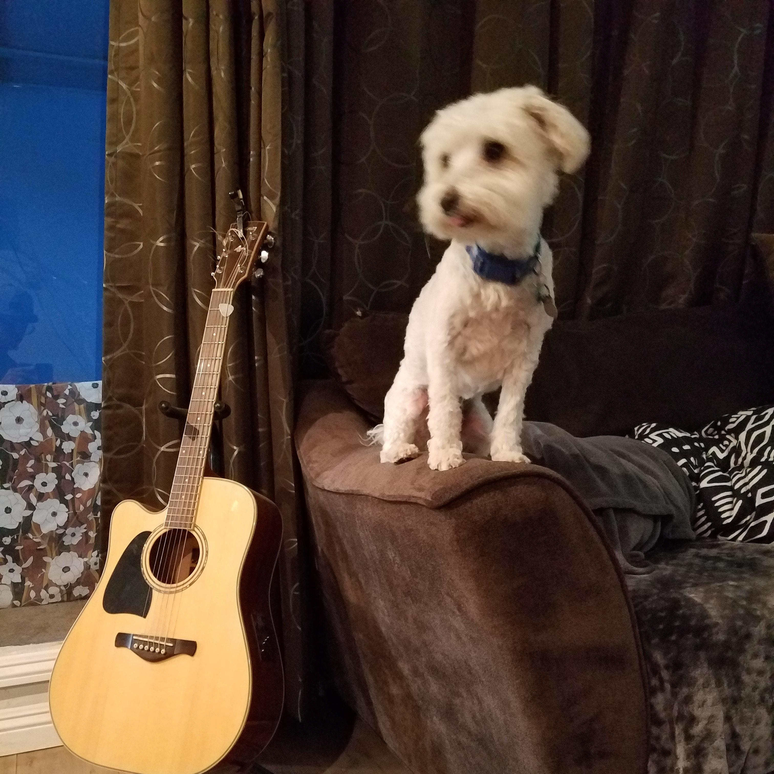 Edward's dog boarding