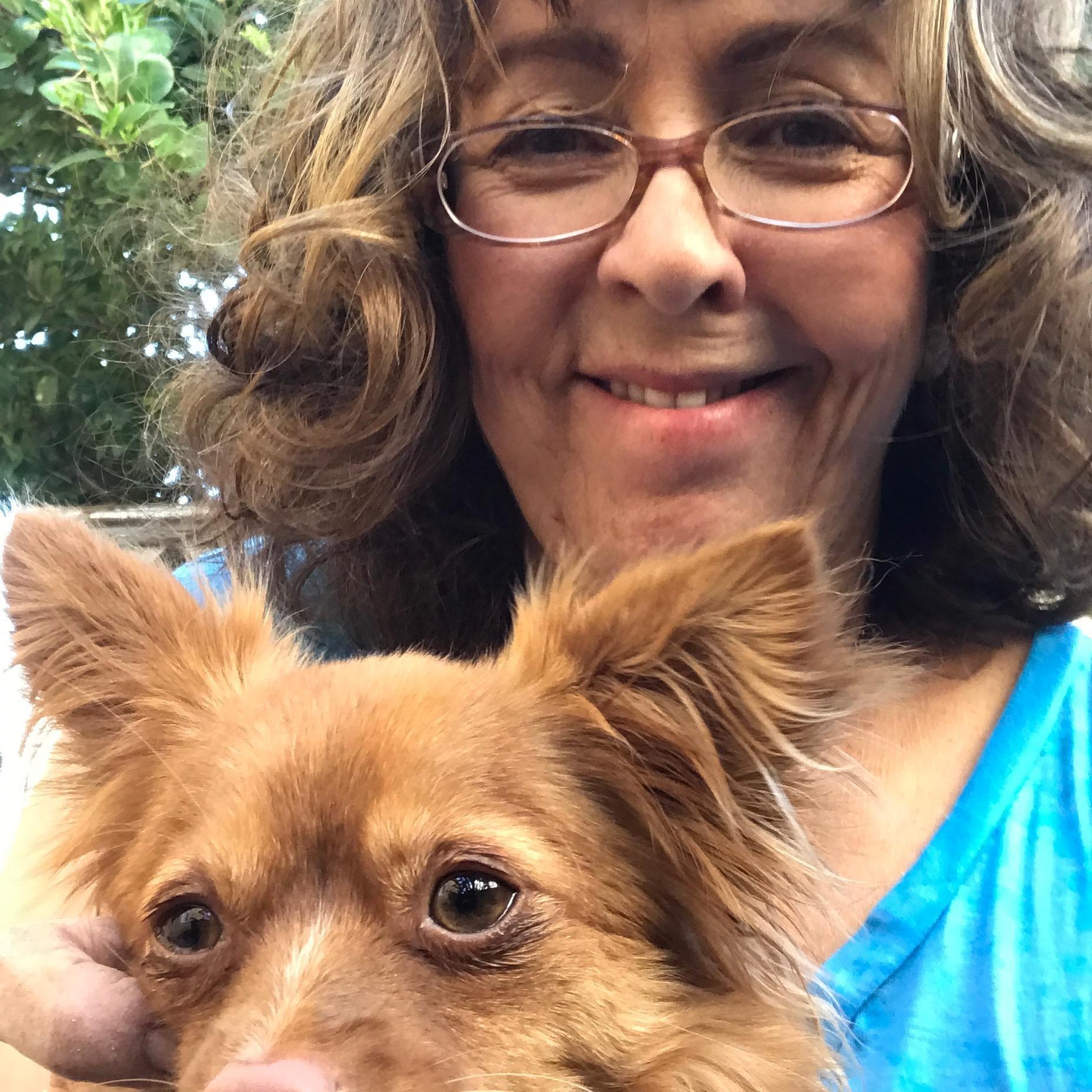 Aida's dog day care