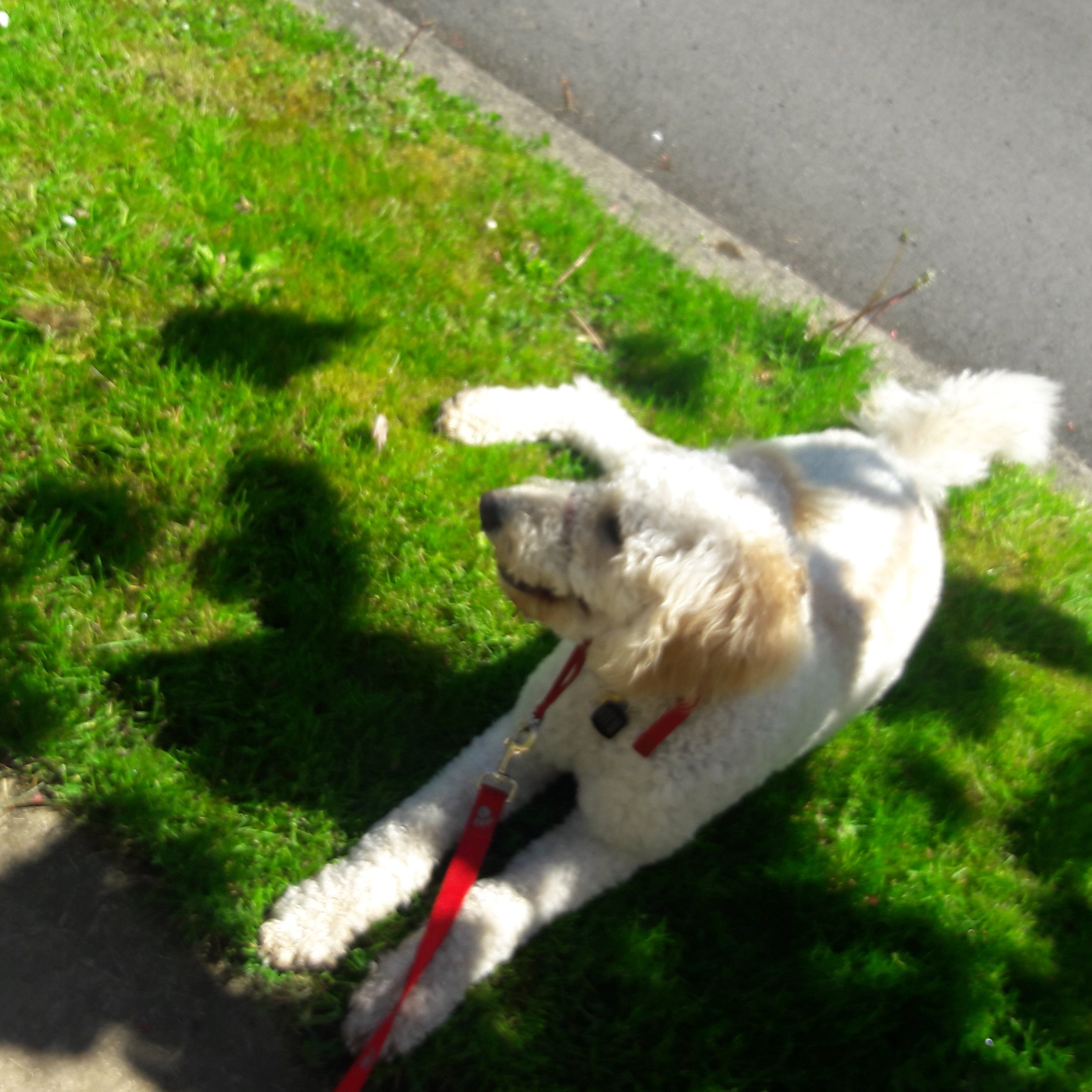 dog walker Terrall