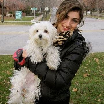 Jahanara's dog day care
