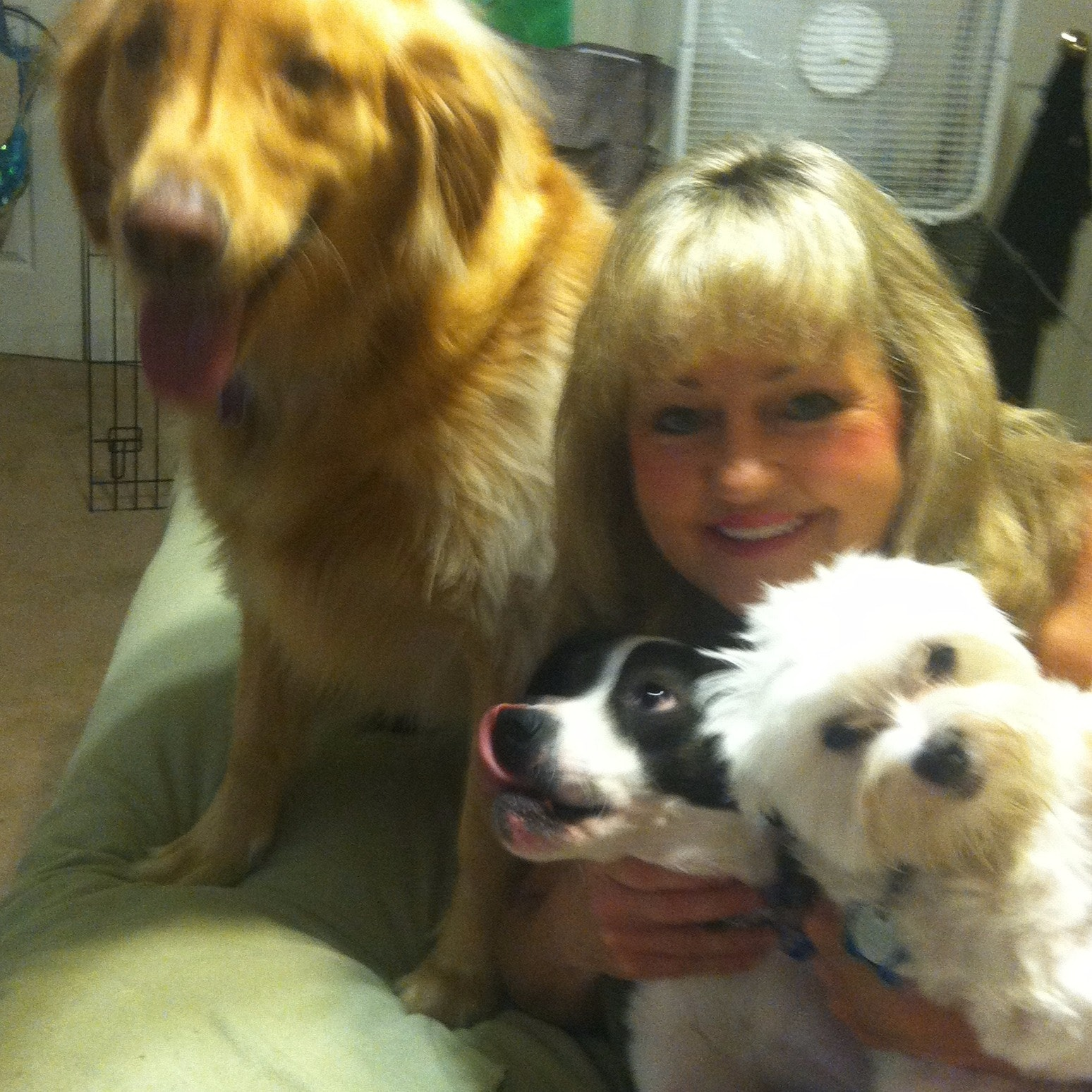 pet sitter Courtenay