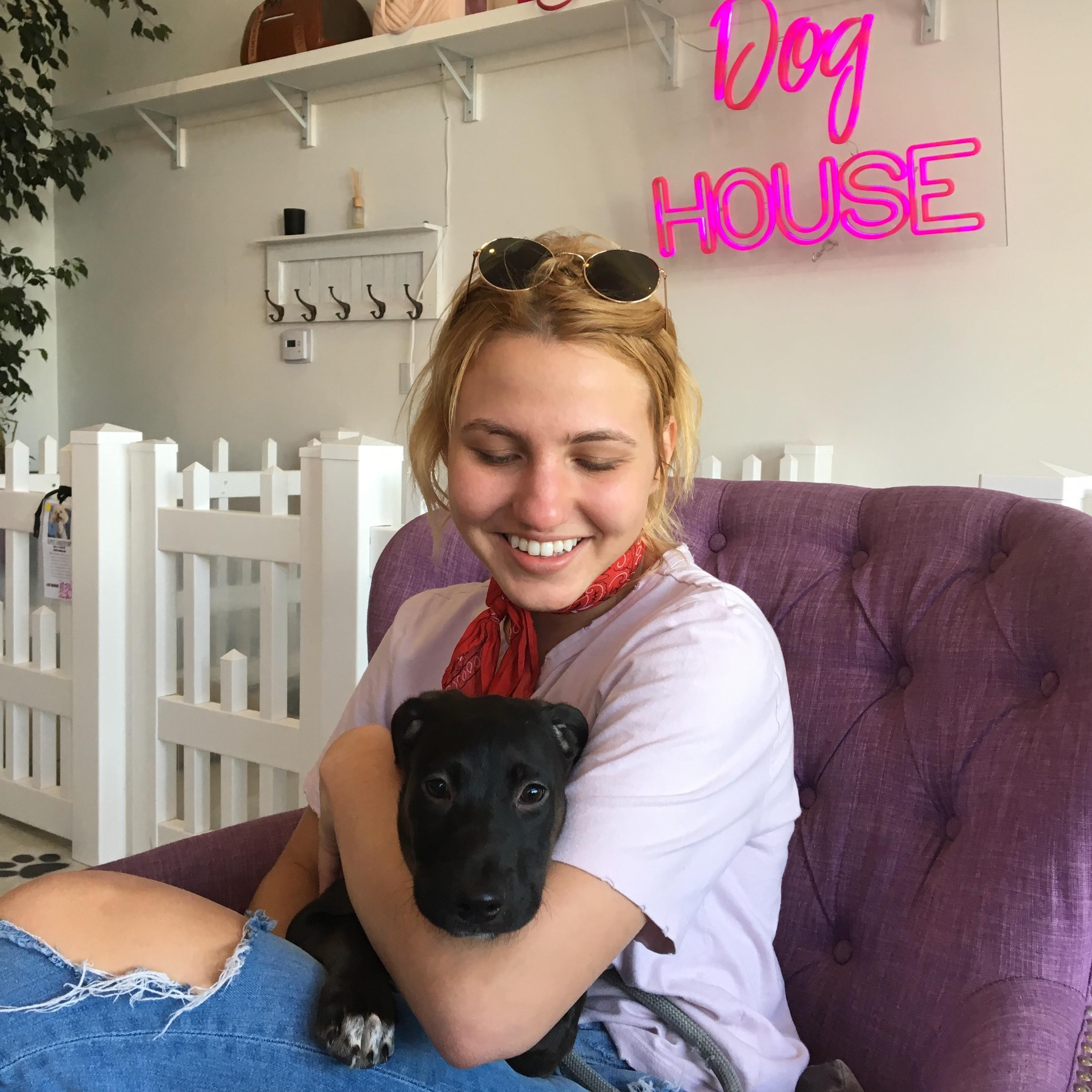 Katie's dog day care