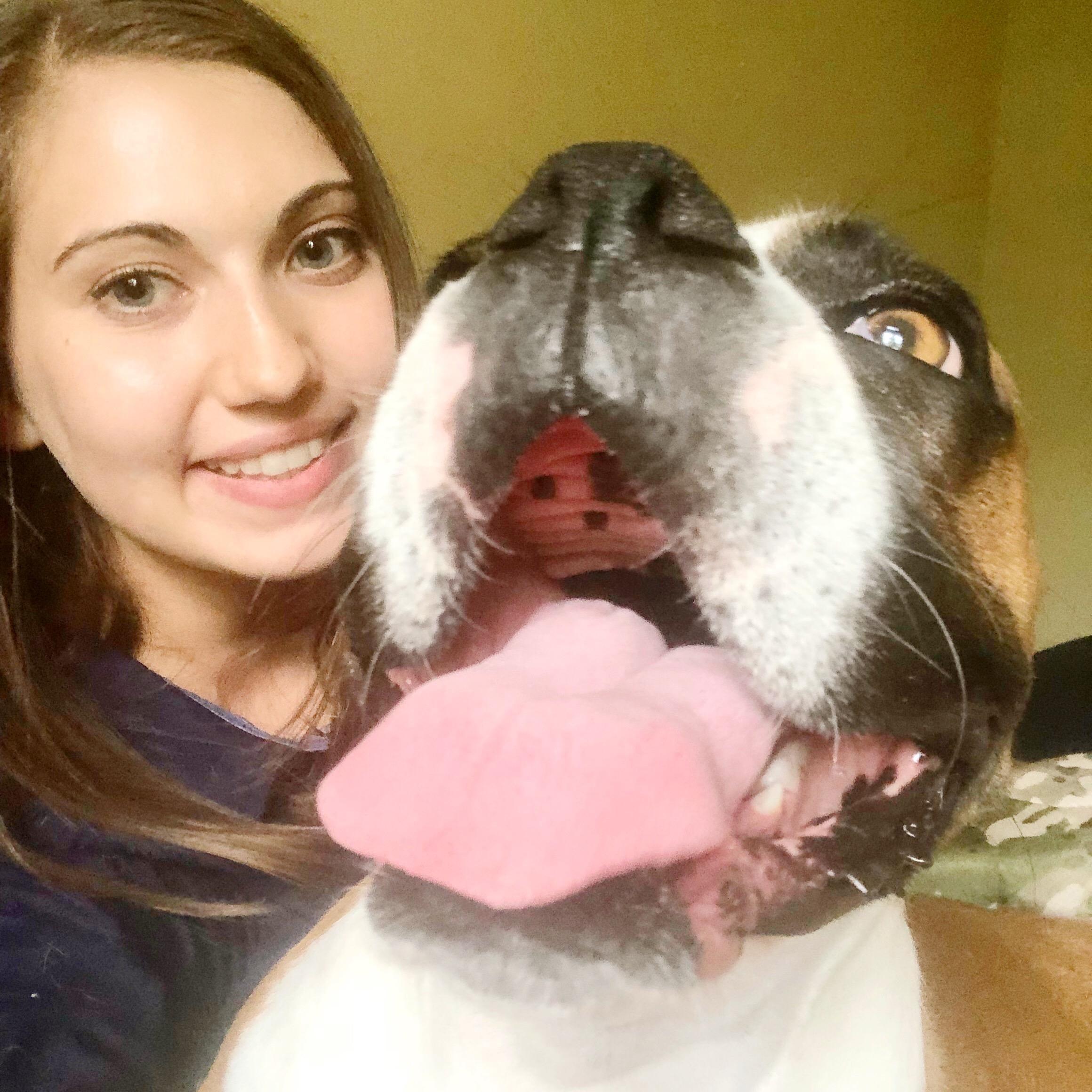 Sierra's dog day care
