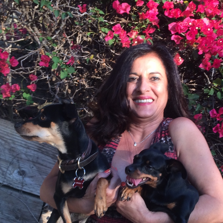 Hetty's dog day care