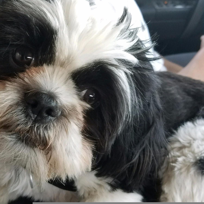 Kimberlie's dog day care