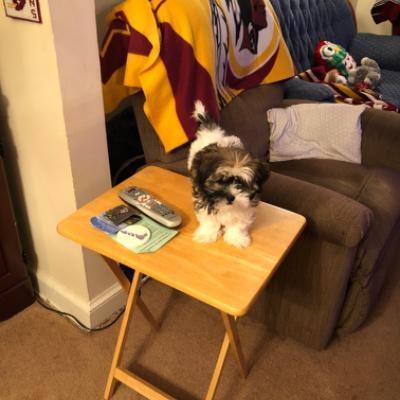 Elizabeth's dog boarding