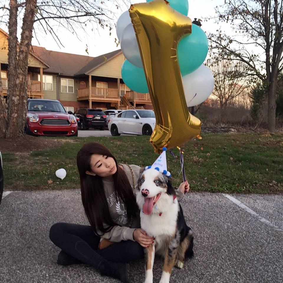 Yi's dog day care