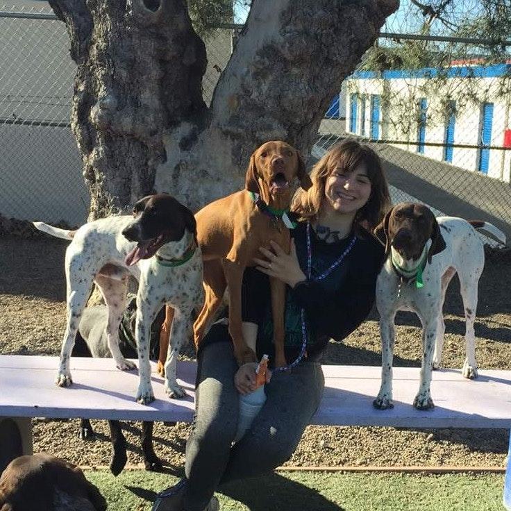 Sara's dog boarding