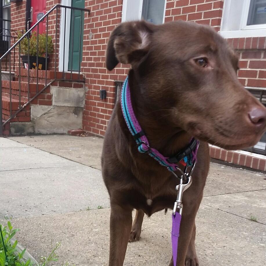 Quinetta's dog day care