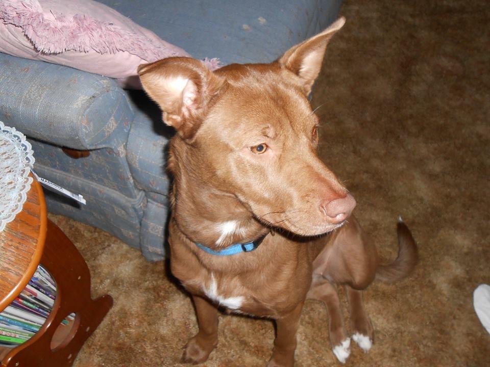 dog walker Sterling