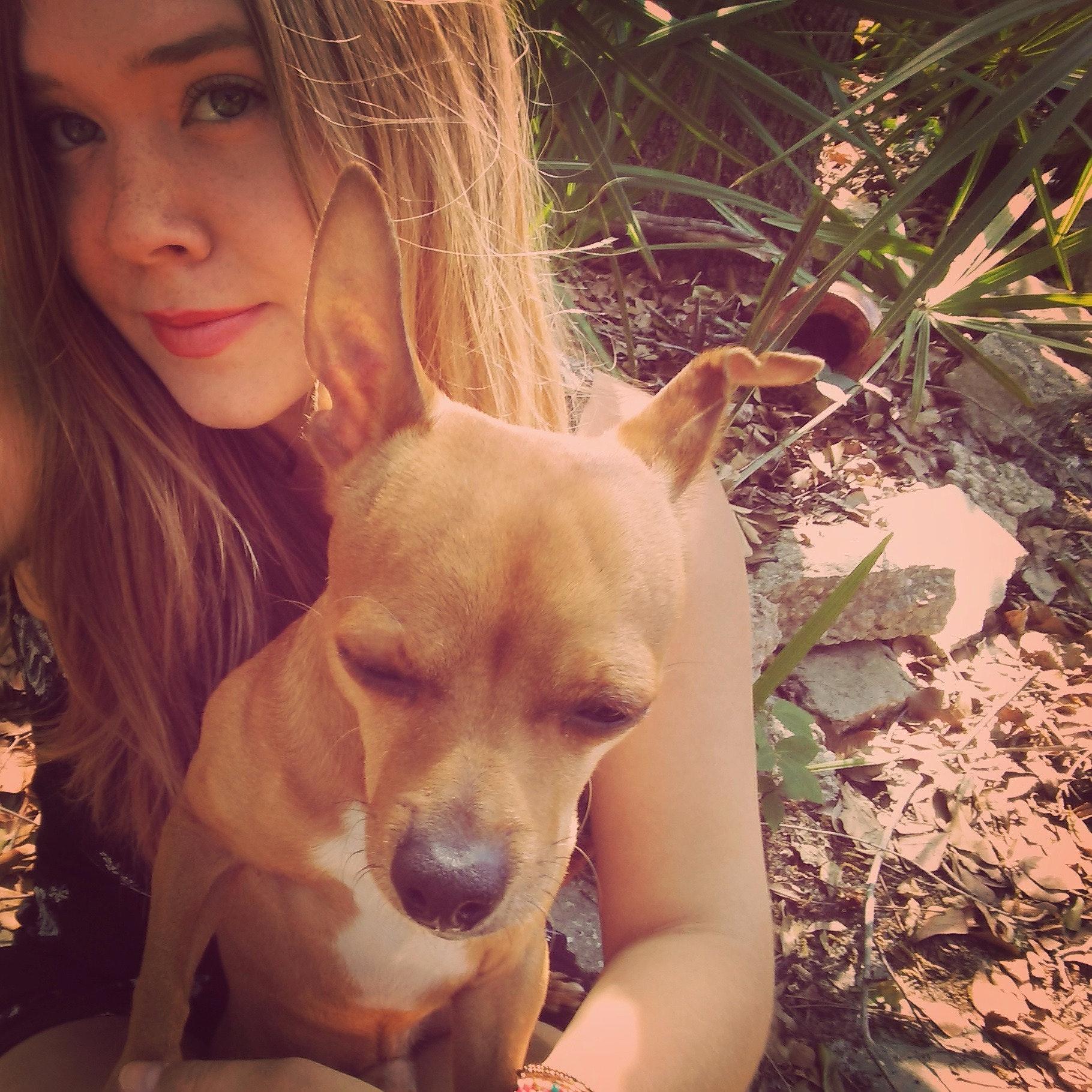 Nikki's dog day care