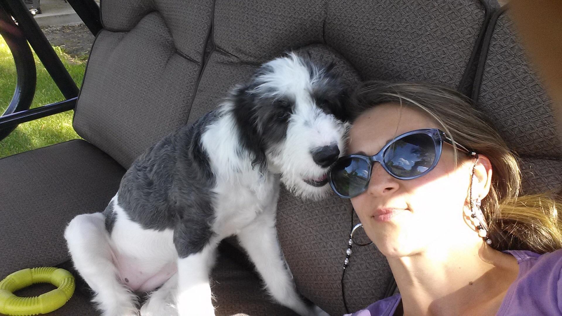 Sabina's dog day care