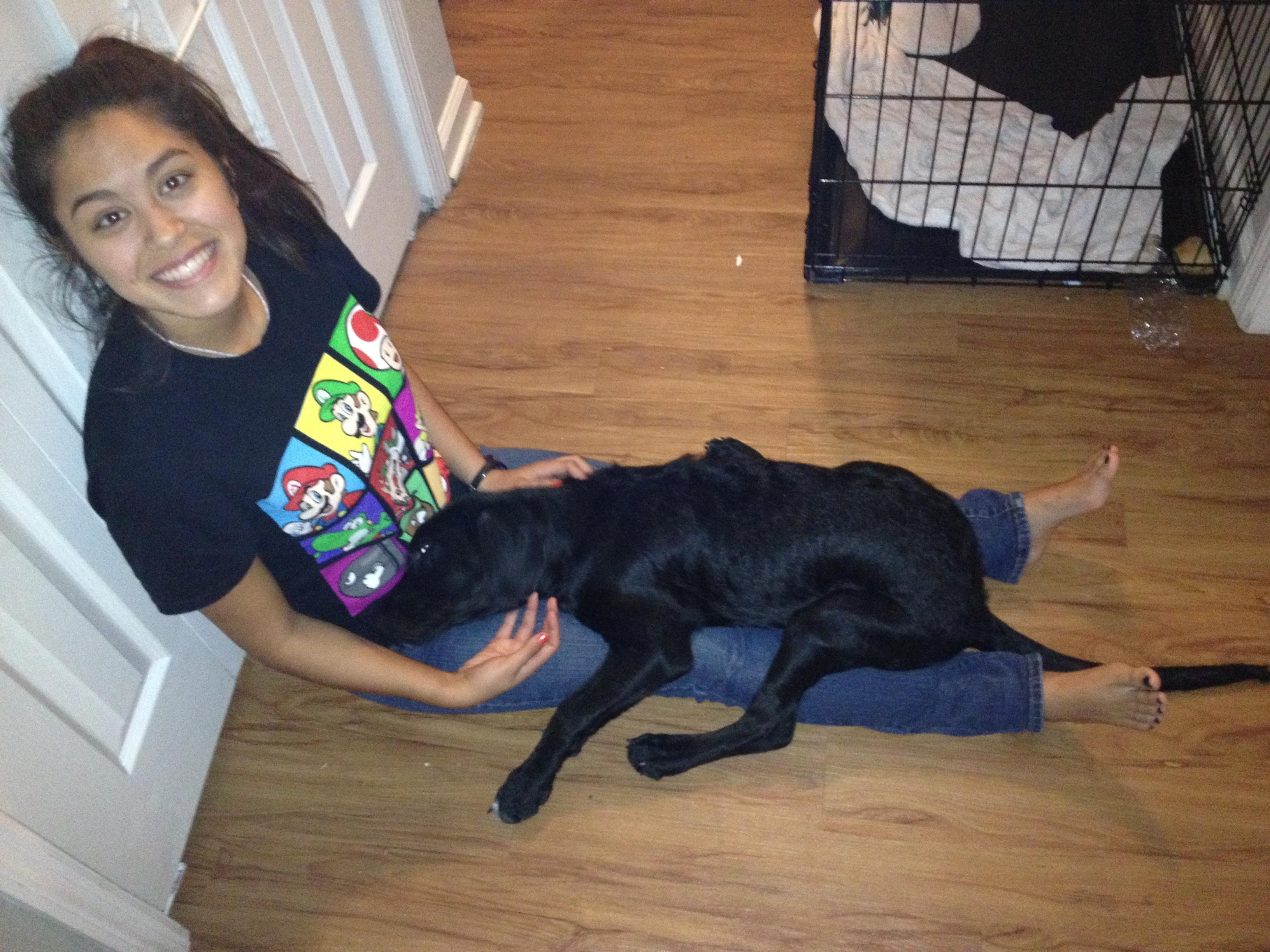 Carol's dog day care
