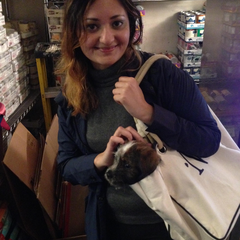 Neha's dog day care