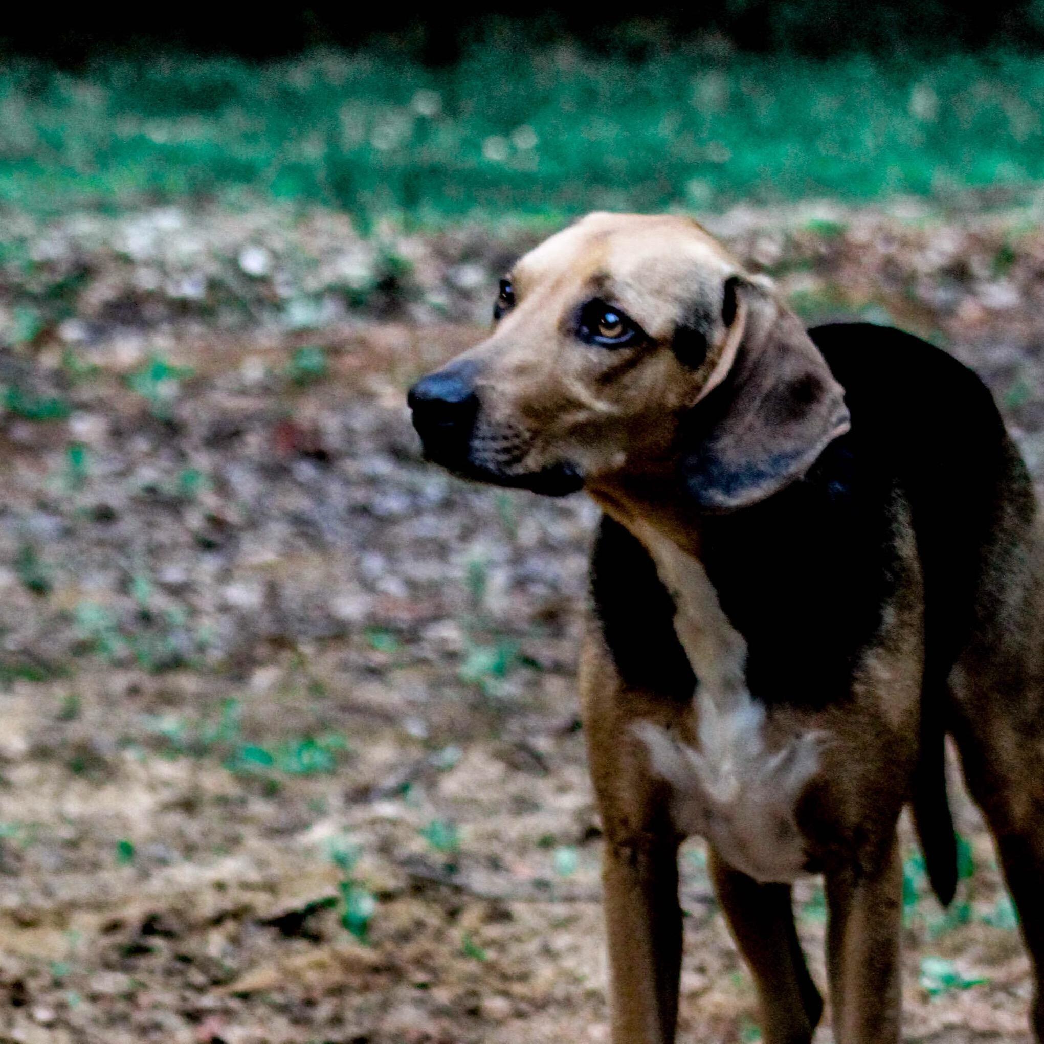 dog walker Jacqueline