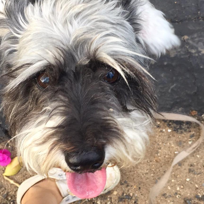 dog walker Shara