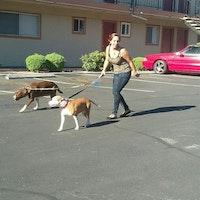 dog walker Genesis
