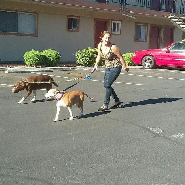Genesis's dog boarding