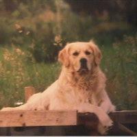 claude's dog boarding