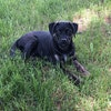 Dog Profile Image