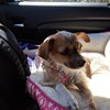 Best Dog Boarding North Dallas