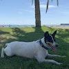 Foto de perfil del perro