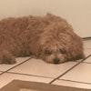 Dog Boarding Apollo Beach Fl