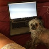 Dog Boarding Tucker Ga