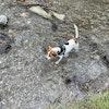 Photo de profil du chien