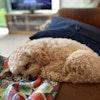 Profielfoto hond