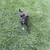 Dog Profile Image